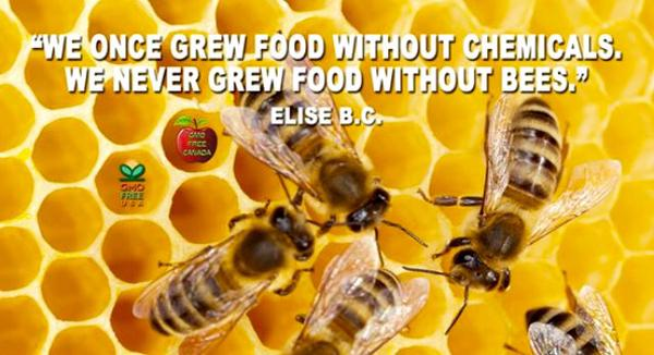 Food stamps quote We once grew good without chemicals. We never grew food without bees.