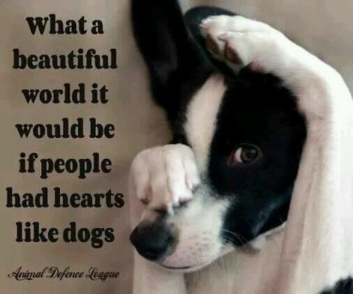 What a beautiful world it would be if people had hearts like dogs. - Sayings