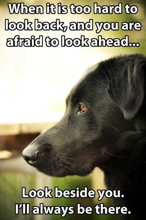 Pet loss quote When it is too hard to look back, and you are afraid to look ahead... Look besid