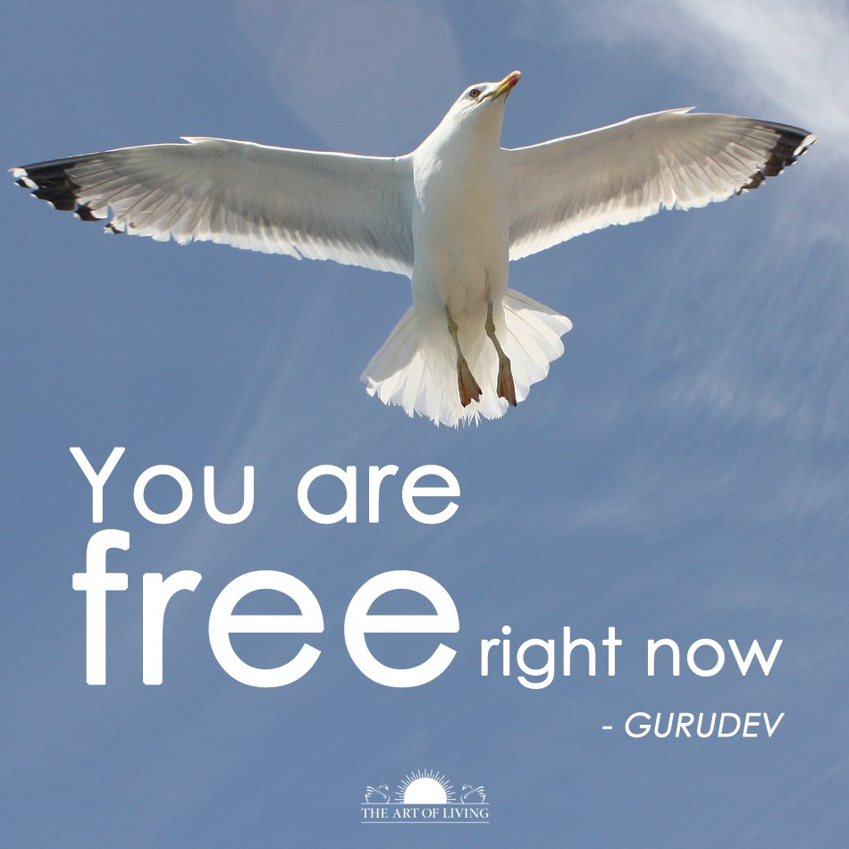 Rights and freedoms quote You are free right now.